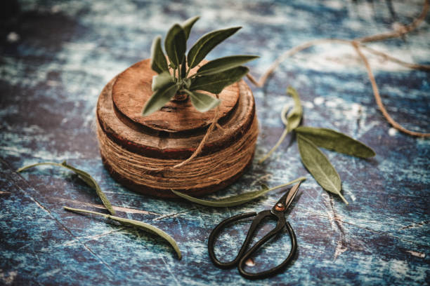 Fresh sage bundle stock photo