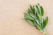 Fresh Sage herb bundle on beige natural burlap background with copy space
