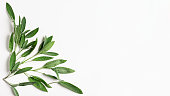 Fresh sage leaves pattern. Frame with salvia herbs on white background.Top view, flat lay, design element and banner. Healthy eating and dieting concept