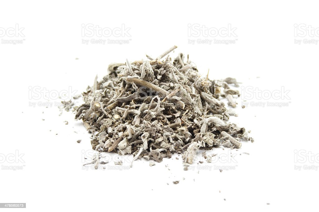 Fresh Sage on white background stock photo