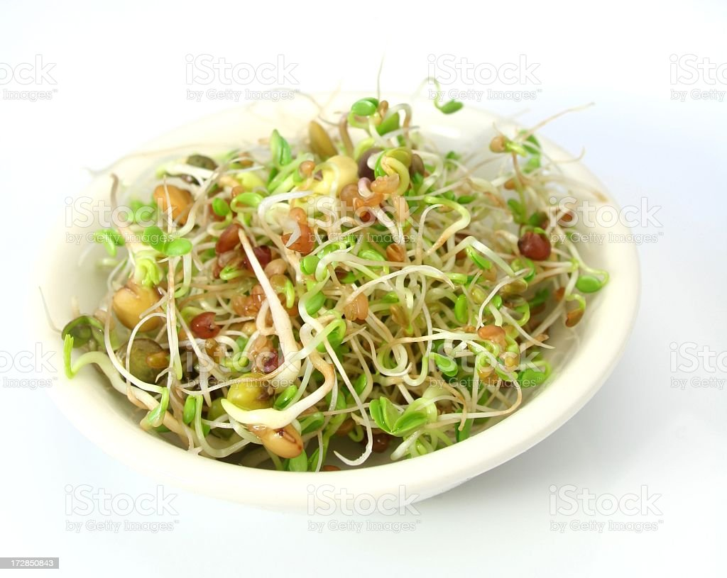 Fresh salad mixed with germ buds and bean shoots stock photo