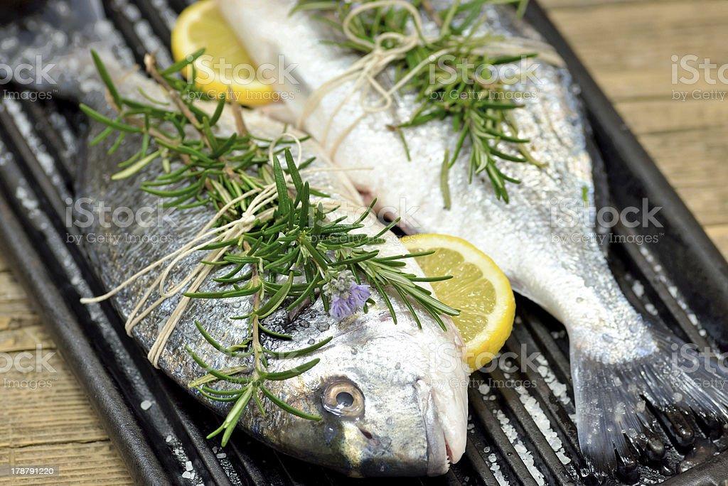 fresh sea bream fish royalty-free stock photo