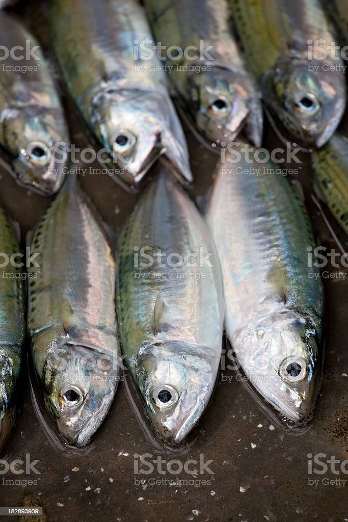 Fresh sea fish in a town market. royalty-free stock photo