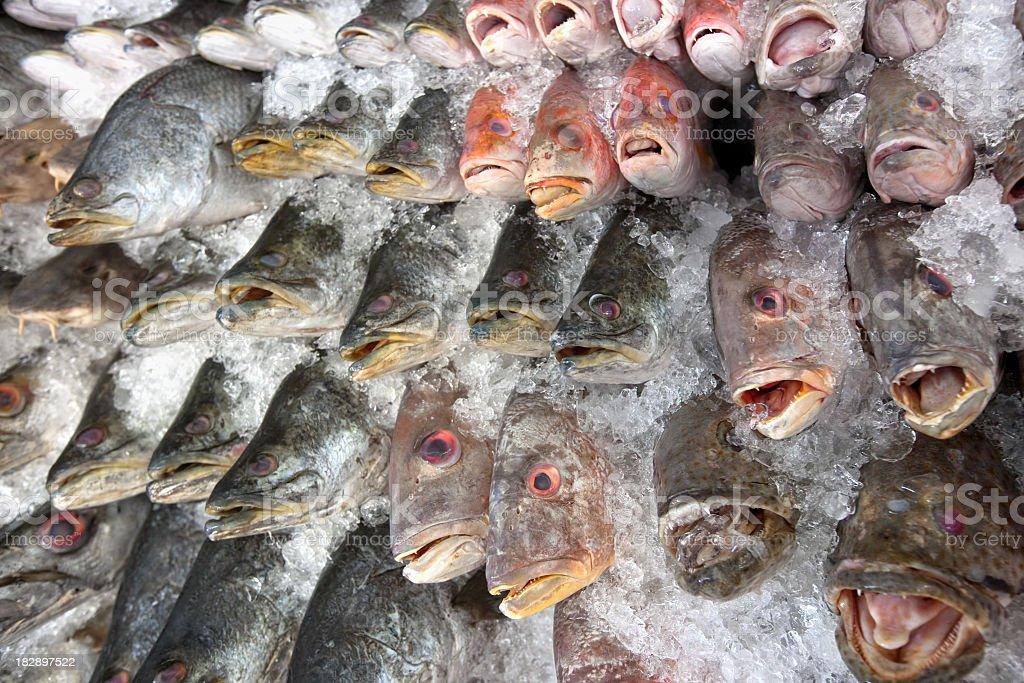 Fresh sea fish in an Asian market. royalty-free stock photo
