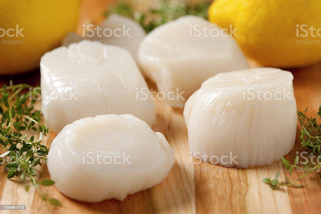 Fresh Sea Scallops royalty-free stock photo