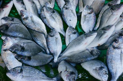 istock fresh seafood, fish on the market 970085510