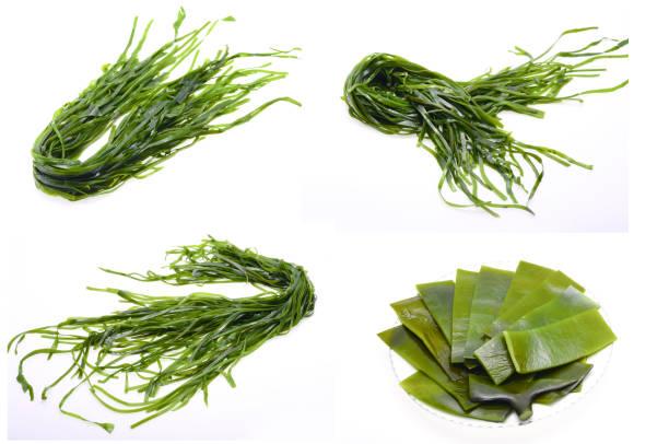 färska skaldjur kelp - sjögräs alger bildbanksfoton och bilder