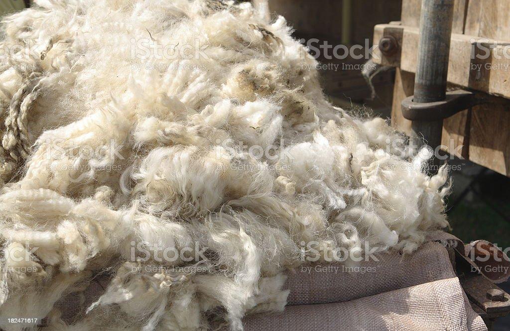 Fresh Sheeps Wool stock photo