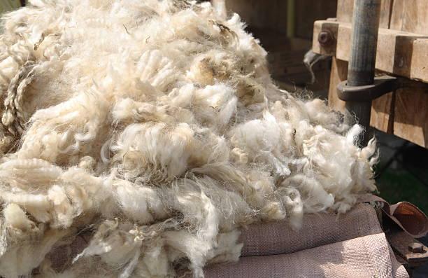 Fresh Sheeps Wool