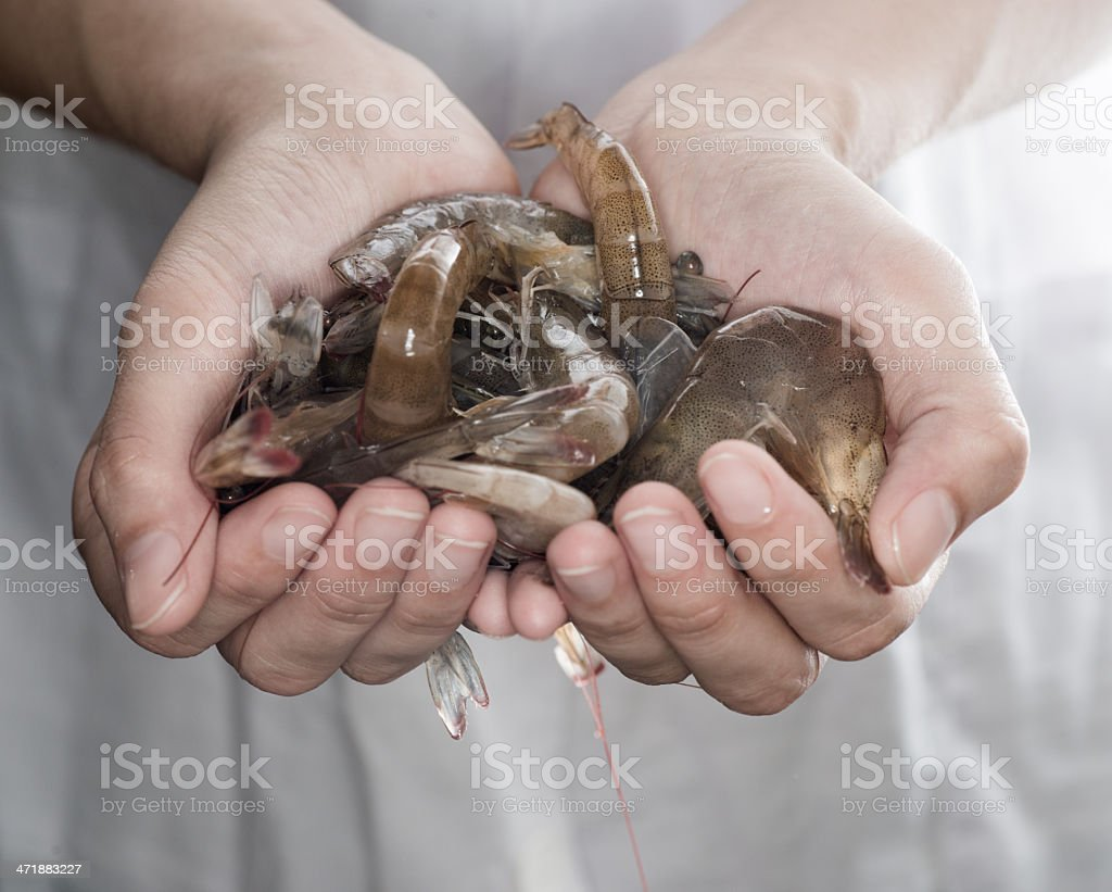 fresh shrimp on hand royalty-free stock photo