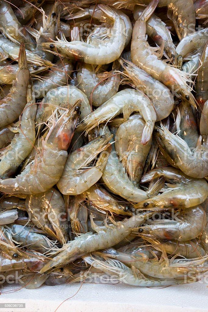 fresh shrimps royalty-free stock photo