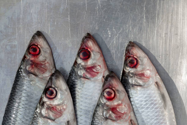 Fresh silver herring top view still life stock photo
