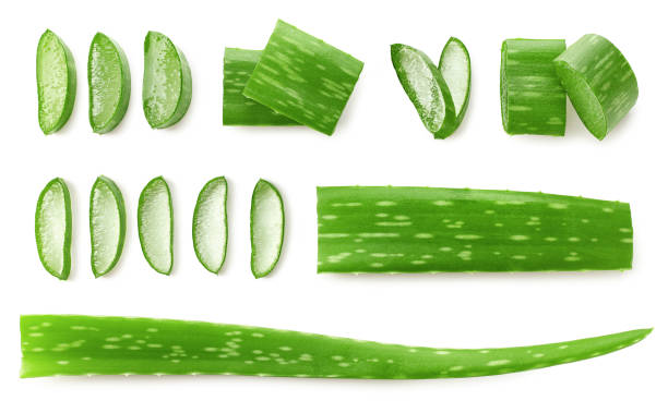 Fresh sliced Aloe Vera leaf Fresh sliced Aloe Vera leaf isolated on white background, top view aloe stock pictures, royalty-free photos & images