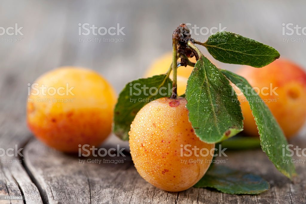 Fresh small yellow plums (mirabelles) with water drops stock photo