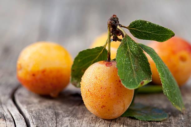 des petites jaune prunes (mirabelles) avec des gouttes d'eau - mirabelle photos et images de collection