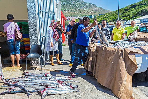 Fresh snoek arriving at the docks in Hout Bay Hout Bay, South Africa - October, 11th 2015: Fresh snoek arriving at the docks in Hout Bay being unloaded as tourists look around waiting to purchase this favourite South African fish, cooked fresh or dried and smoke.  hout stock pictures, royalty-free photos & images
