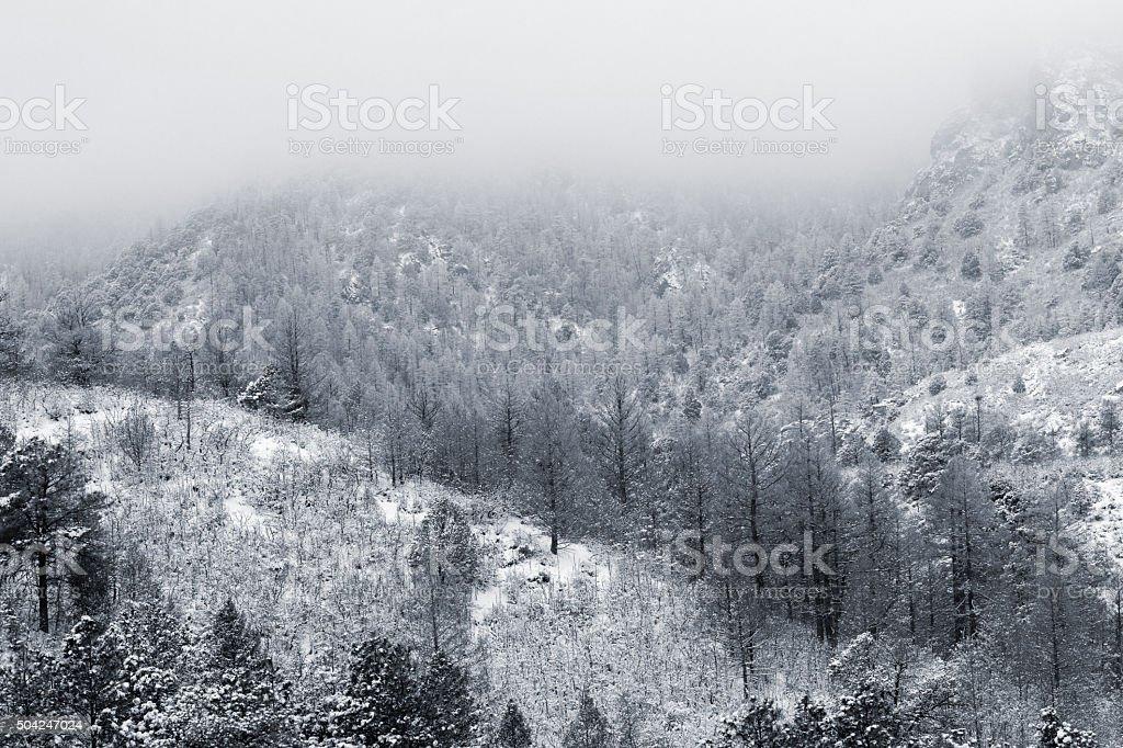 Fresh Snow in Cheyenne Mountain State Park stock photo