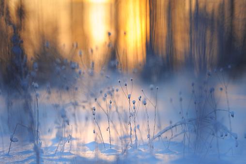 Fresh snow on dried plants