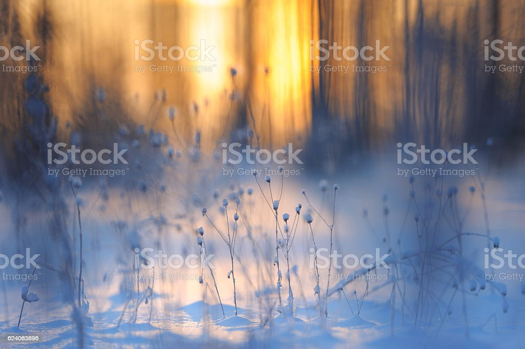 Fresh snow on dried plants stock photo