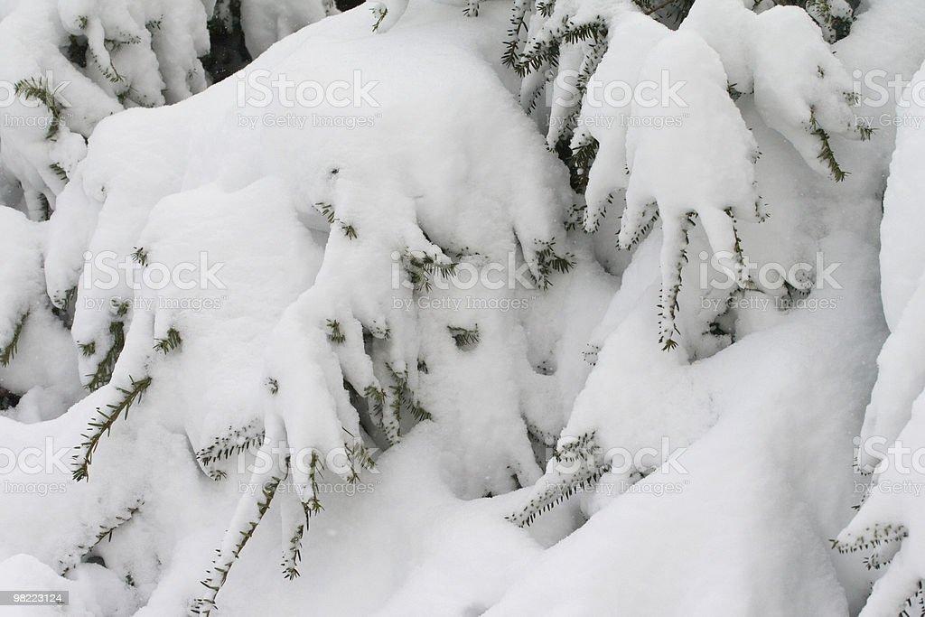 Neve fresca foto stock royalty-free