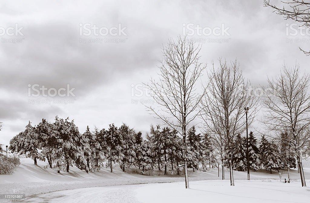 Fresh Snow Scene stock photo