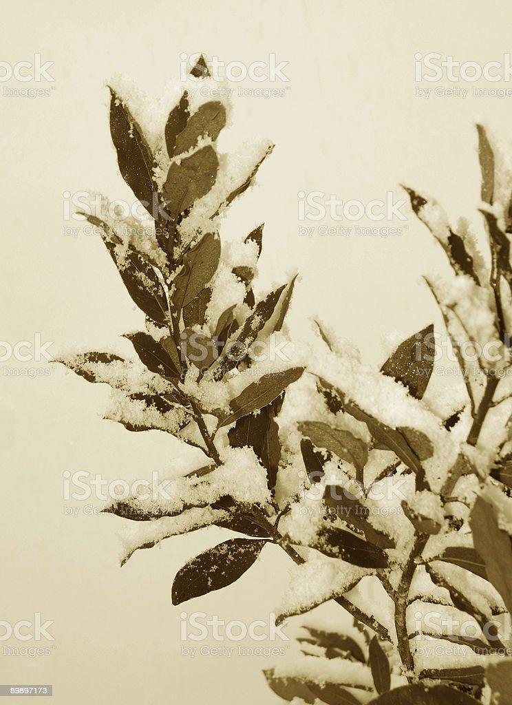 Fresh snow sepia royalty-free stock photo