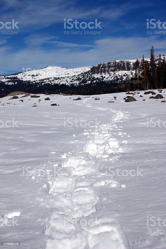 Fresh Snowshoe Tracks stock photo