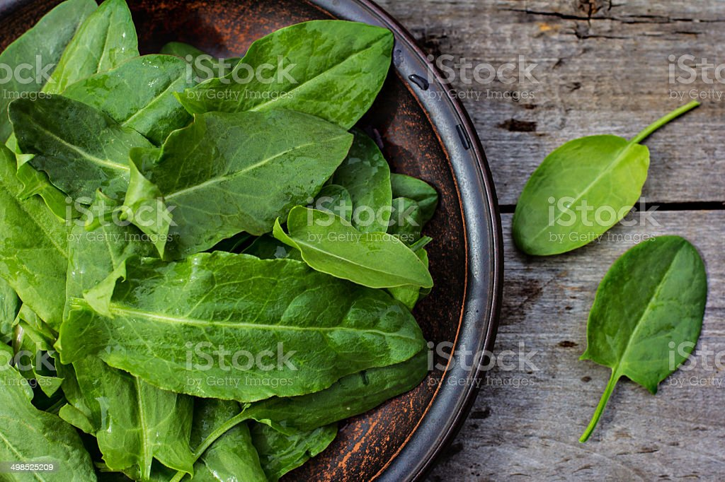 fresh sorrel on a plate stock photo