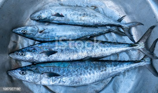 635931692istockphoto Fresh Spanish mackerel fish caught in the fish market. This fish species live in the waters of the central and south east of Vietnam 1057027192