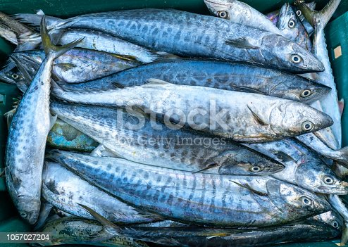 635931692istockphoto Fresh Spanish mackerel fish caught in the fish market. This fish species live in the waters of the central and south east of Vietnam 1057027204