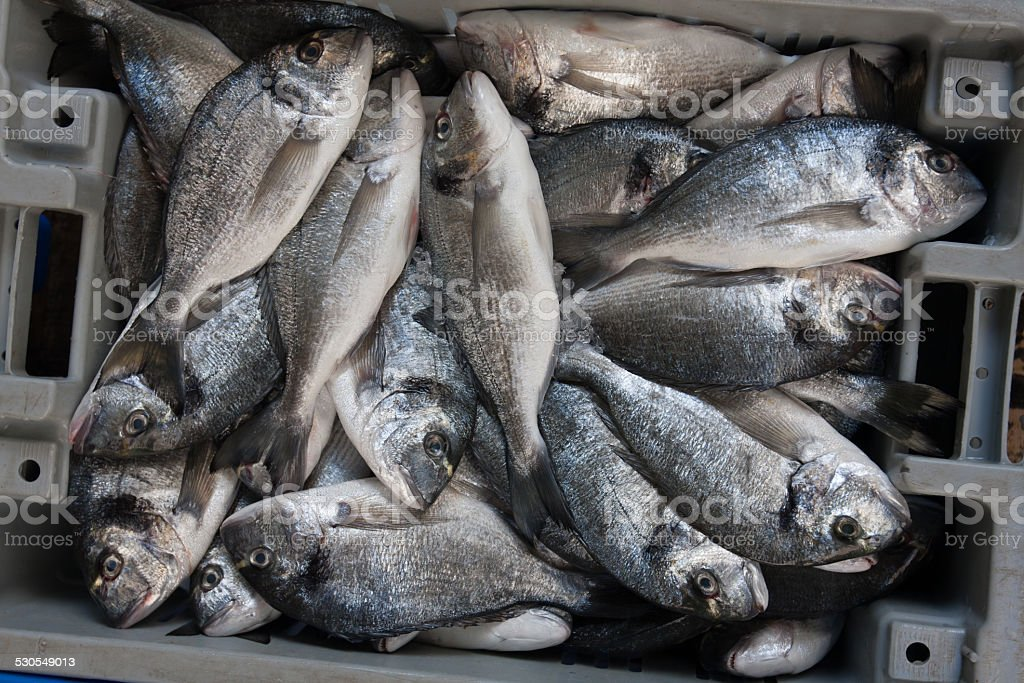 fresh Sparus aurata fishes stock photo