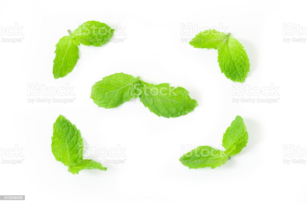 Fresh spearmint leaves isolated on the white background. close up beautiful mint, peppermint. stock photo