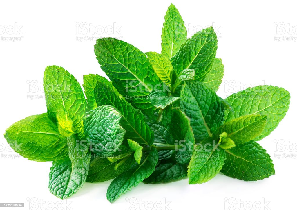 Fresh spearmint leaves isolated on the white background. Mint, peppermint close up'n - fotografia de stock