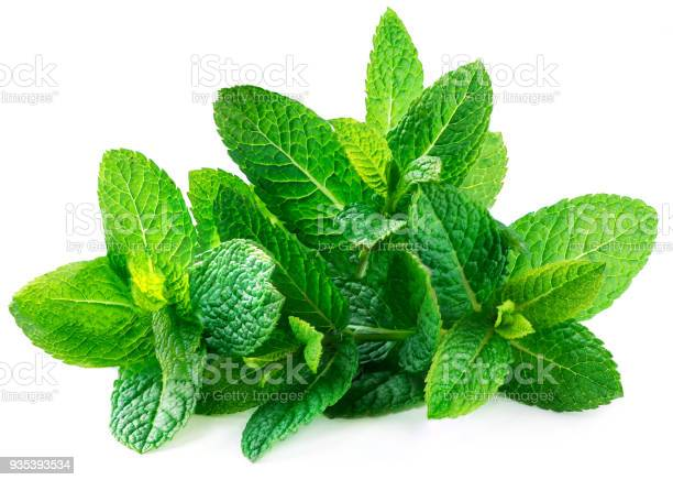 Photo of Fresh spearmint leaves isolated on the white background. Mint, peppermint close up