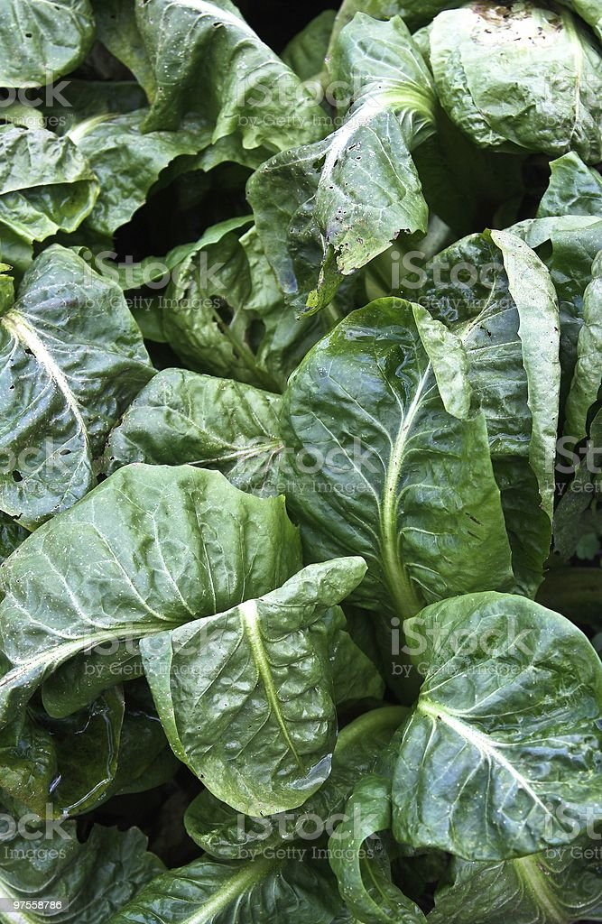 Fresh spinach from the market royalty-free stock photo