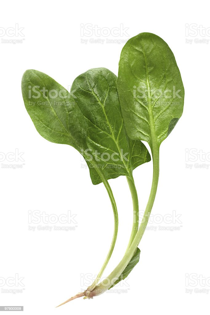 Fresh spinach royalty-free stock photo