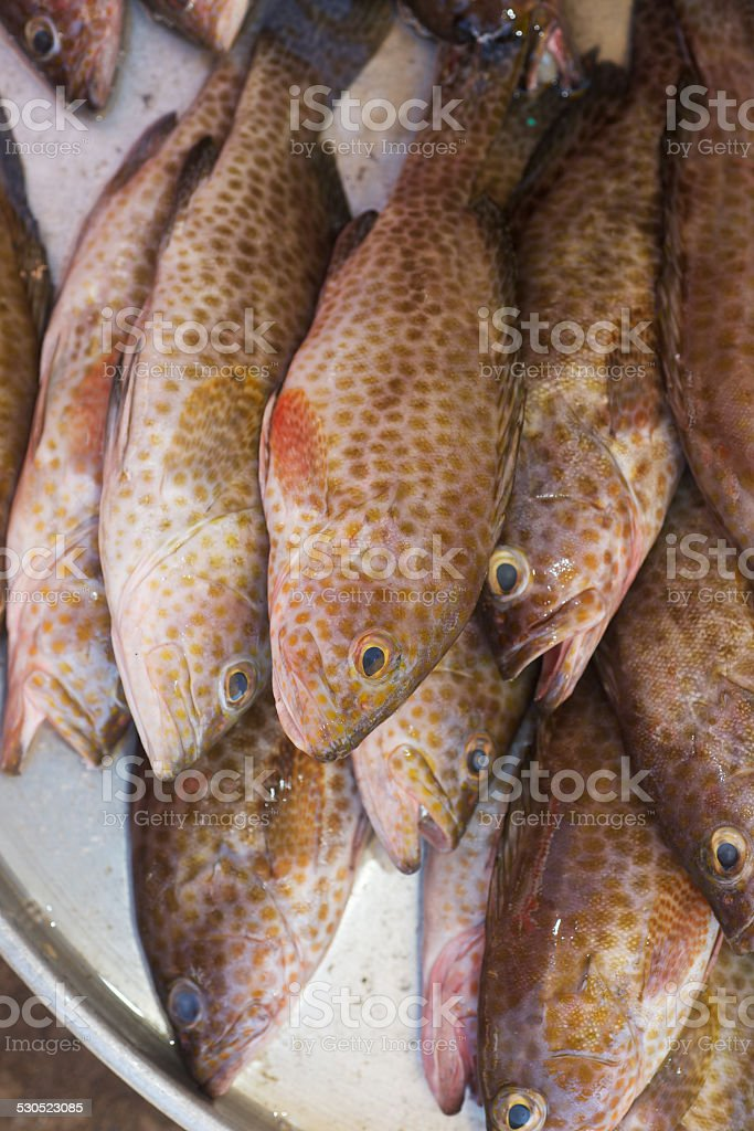 Fresh spotted sea grouper vertical photo stock photo