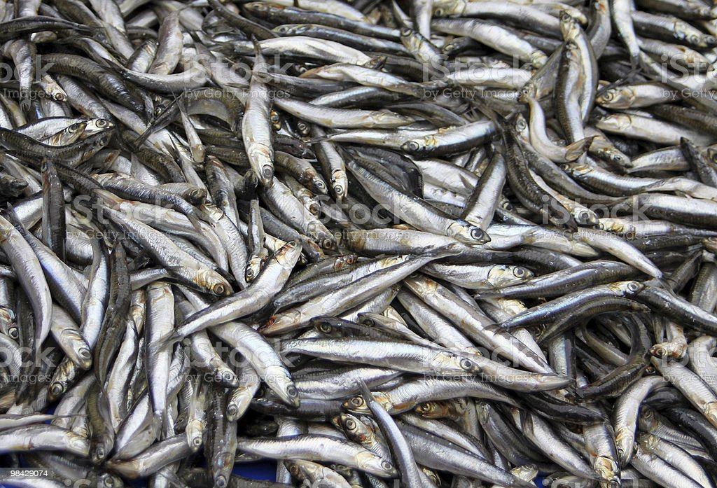 Fresh sprats royalty-free stock photo