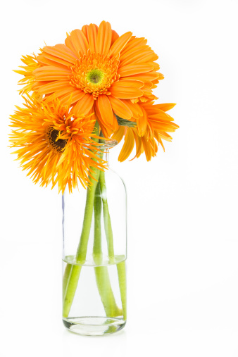 Fresh Spring Bouquet Stock Photo - Download Image Now