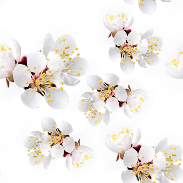 frischen frühlingsblumen aprikose - blumendrucktapete stock-fotos und bilder