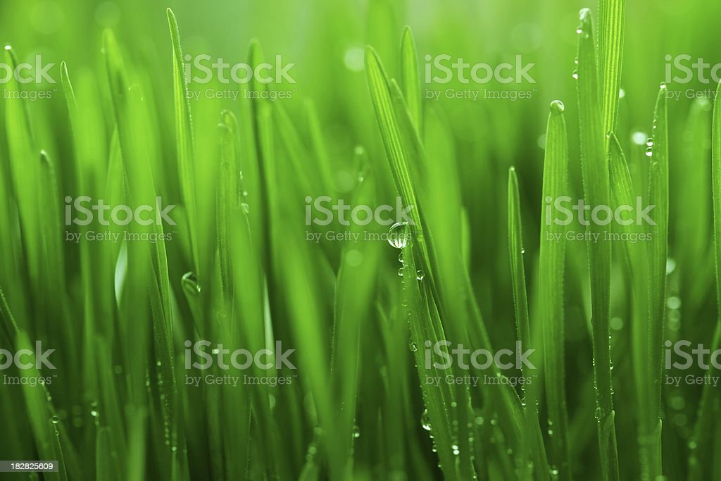 fresh spring grass background royalty-free stock photo
