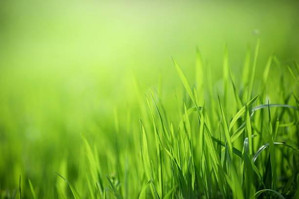 sfondo fresco verde primaverile - filo d'erba foto e immagini stock