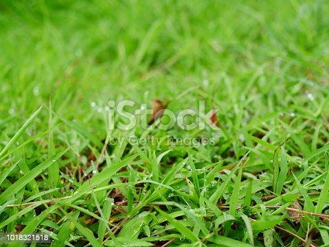 672372726istockphoto Fresh spring grass 1018321518