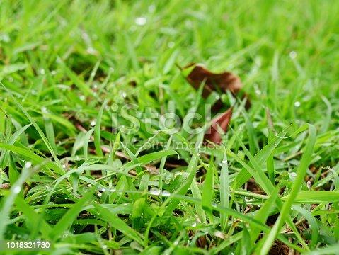 672372726istockphoto Fresh spring grass 1018321730