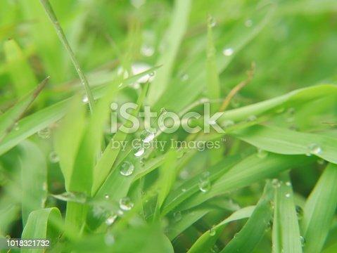 672372726istockphoto Fresh spring grass 1018321732