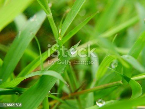 672372726istockphoto Fresh spring grass 1018321828
