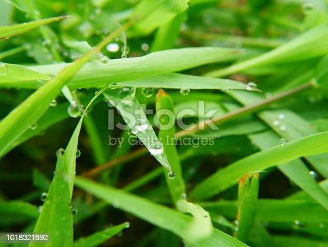 672372726istockphoto Fresh spring grass 1018321892