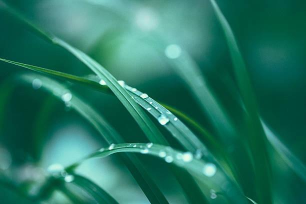 erba fresca primavera  - filo d'erba foto e immagini stock