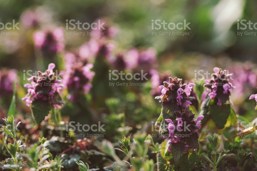 Fresh spring grass with flowers on a sunny day with natural blurred background foto stock royalty-free