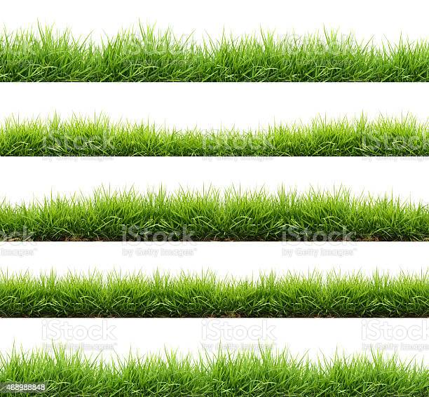 Fresh spring green grass isolated picture id468988848?b=1&k=6&m=468988848&s=612x612&h=klvi6ckbev4habr 0wd8eag6e2 xcssz4xvn8m vbfy=